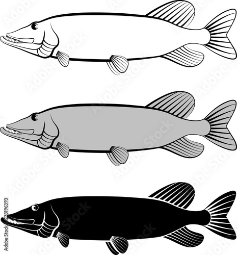 pike fish - clip art illustration Fotobehang