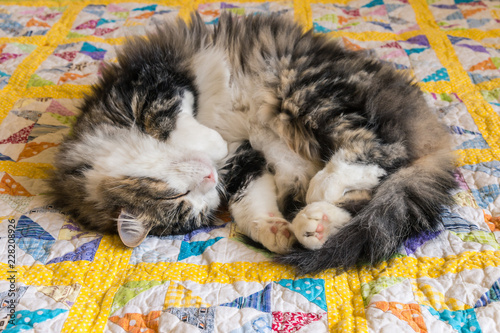 Canvas Print tabby tomcat sleeping curled up on yellow quilt cover