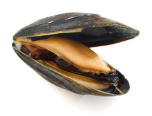 A Mussel In Its Shell On A Whi...