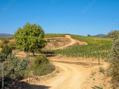 Fotografía  Dirt road trough vineyards in the wine country - Villafranca del Bierzo, Castile