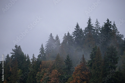 Fototapeten Wald fog and trees landscape