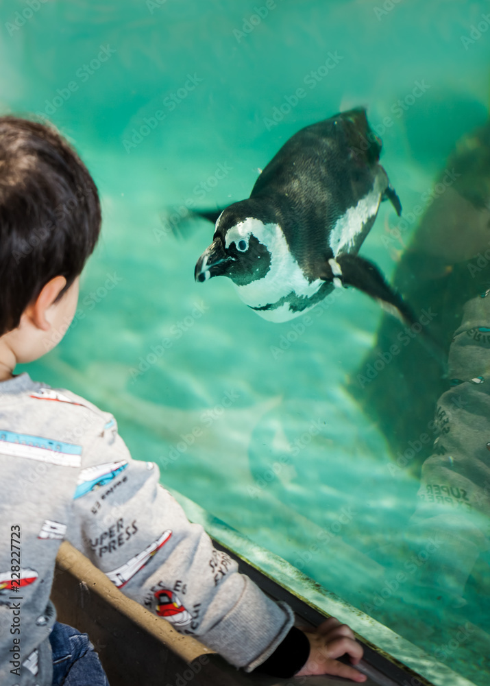 Boy watching a penguin swimming at aquarium