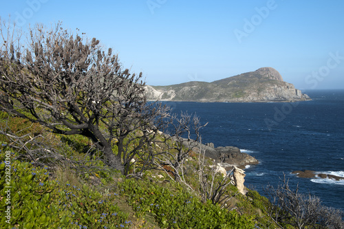 Fotografie, Tablou  Albany Australia, coastal view to headland with bankisa tree covered in cones