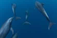 Dolphins In Byron Bay