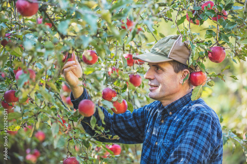 Fotografía A man harvesting a rich harvest of apples in the orchard