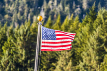 USA Flag Waving On Forest Outd...