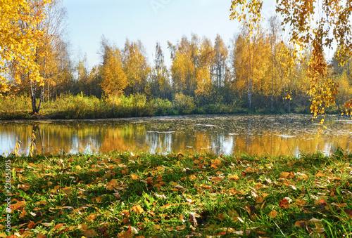 In de dag Honing Autumn beautiful landscape