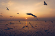 Silhouette seagull birds flying over the blue sea water with yellow sun light shining in the evening background.