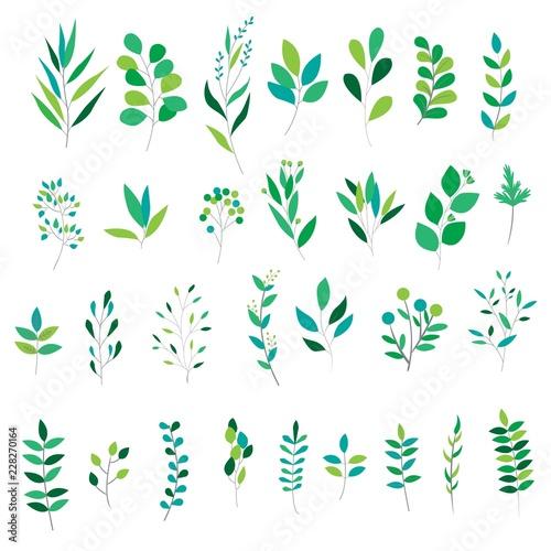Fototapeta green leaves collection obraz na płótnie