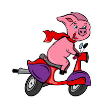 Funny Pink Pig Rider On A Red Fast Bike Scooter