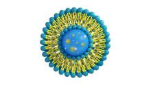 Liposome Structure Cell 3D Ren...