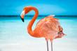 canvas print picture - fenicottero rosa