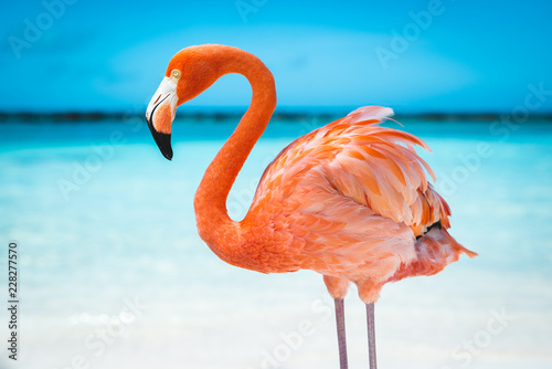 Photo sur Aluminium Flamingo fenicottero rosa