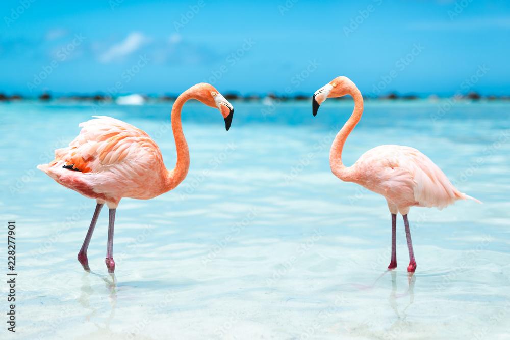 fenicotteri rosa