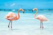canvas print picture - fenicotteri rosa