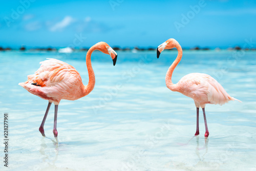 La pose en embrasure Flamingo fenicotteri rosa