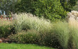 canvas print picture - growth of various species of ornamental grass
