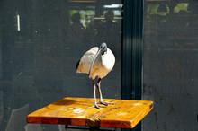 Ibis Bird - Sydney - Australia