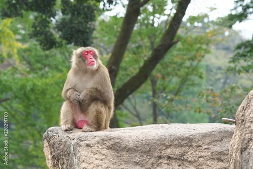 In de dag 猿