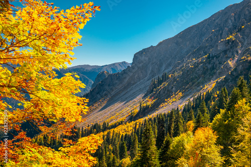 Deurstickers Herfst autumn mountain landscape with yellow, orange and red foliage trees and green pines