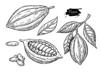 Fototapeta Cocoa vector superfood drawing set.Organic healthy food sketch.