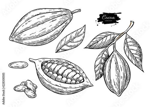 Fotografía Cocoa vector superfood drawing set.Organic healthy food sketch.