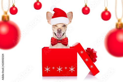 Foto op Canvas Crazy dog christmas santa dogs