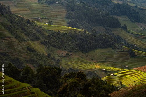 Poster South America Country landscape rice fields on terraced of Mu Cang Chai, YenBai, Vietnam