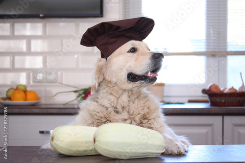 Golden retriever in cook cap standing behind the table with two white courgettes.