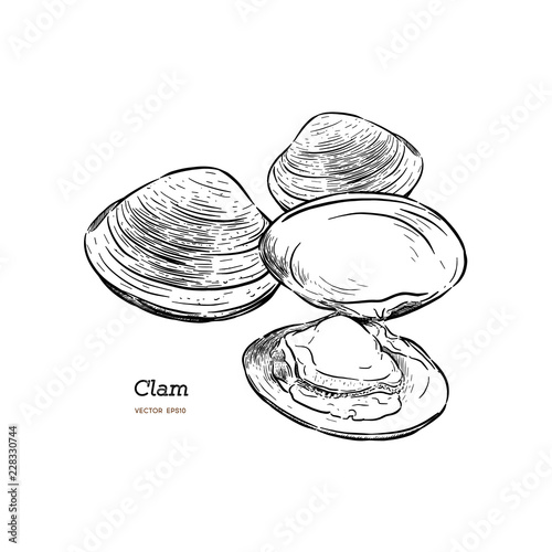 Tablou Canvas Clams, mussels, seafood, sketch style vector