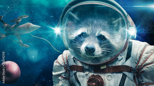 Canvas Prints UFO Space Raccoon