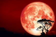 Super Hunter's Moon Back Over Silhouette Tree In Field On Night Sky