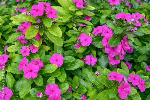 Foto op Canvas Bloemen Ornamental flowers in a park by morning