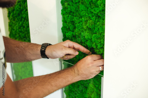 Fototapeta Russia, Novosibirsk - August 16, 2018: decorative moss for interior decoration. office style, interior design elements obraz