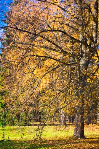 Canvas Prints Honey autumn in the park