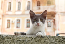 Cat On City Background
