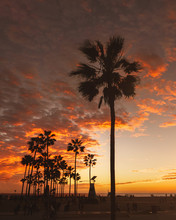 View Of Palm Trees And People On Beach At Sunset