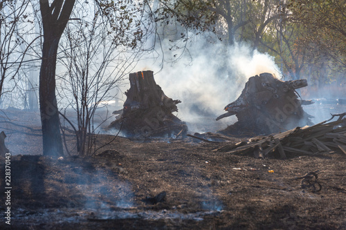 Foto op Canvas Zwart fire in the field and dry wood burns with blue smoke