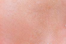 Human Fingerprint, Macro