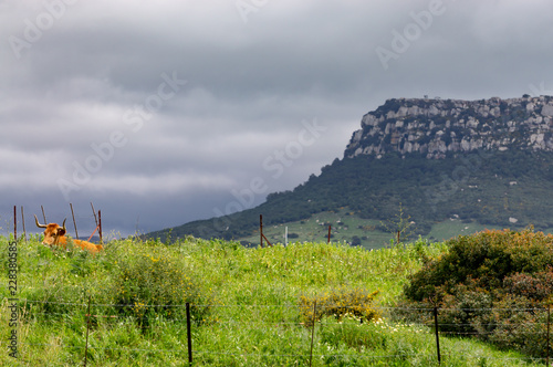 Staande foto Donkergrijs landscape in the mountains bull