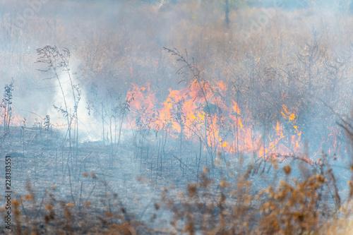 Fototapeta fire in the field - dry grass obraz na płótnie