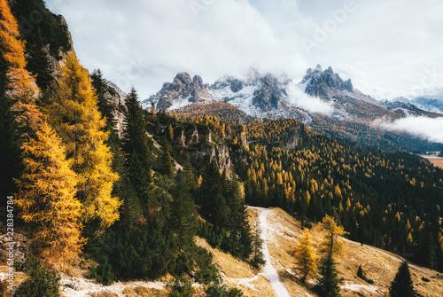 Great view of the yellow larches. National Park Tre Cime di Lavaredo, Dolomiti alp, Tyrol, Italy.