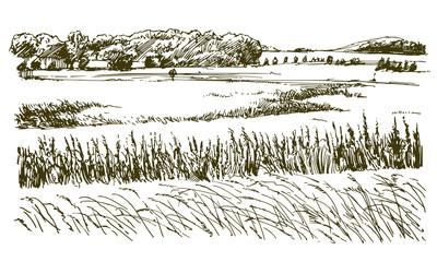 Rural landscape. Hand drawn illustration.