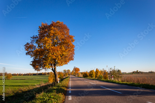 Foto op Canvas Herfst Autumn scene with road and trees