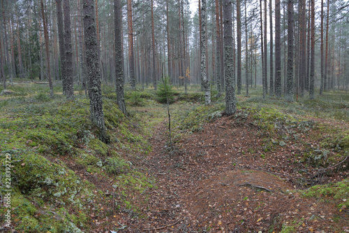 Keuken foto achterwand Bossen Beautiful Karelian forest landscape in early autumn in Russia