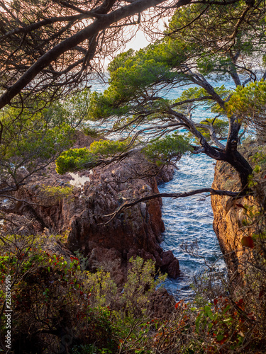 Fotografie, Obraz  jagged mediterranean coastline with pine trees