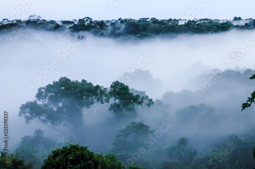 View on morning fog in the brazilian rainforest by Javari river