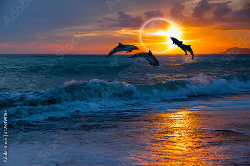 Obraz na plátne Couple dolphins jumping on the water with solar eclipse