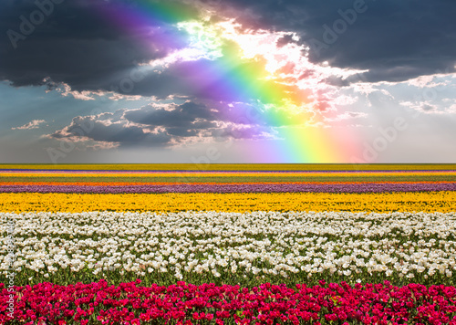 Beautiful landscape with tulip fields against bright cloudy sky - Konya, Tukey