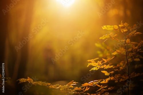 Fotografía  Fall Foliage Background
